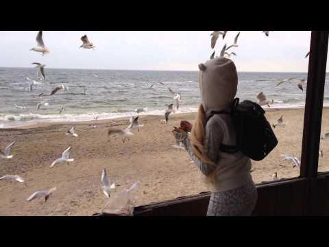 Amatue 21 море и чайки
