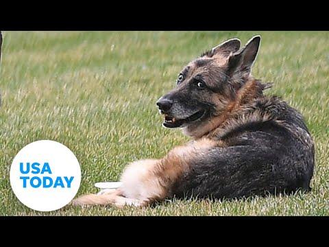 Champ-Biden-President-Bidens-oldest-dog-dies-at-13-USA-TODAY