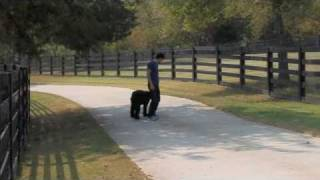 Canine Inc. Nashville Dog Training- Off-leash With A Briard