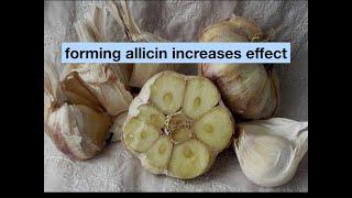 Garlic vs Infection