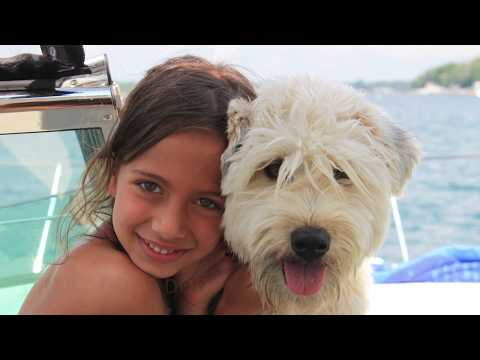 #50 Wheaten Terrier Maddison Maximus My Only Dog Ever