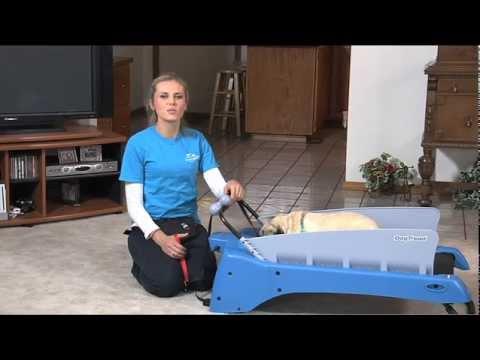 How Do I Train My Dog to Use a Treadmill?