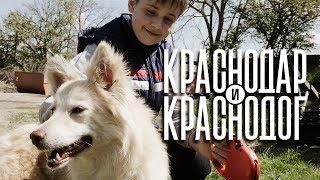 Краснодар и Краснодог. Короткометражный социальный фильм.