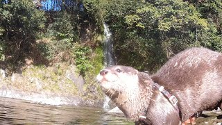 A place where Japanese otters lived [Otter life Day 197]