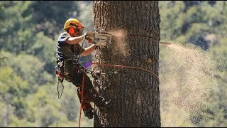 10 Most Dangerous Jobs In The World ! Mysterious world bangla !