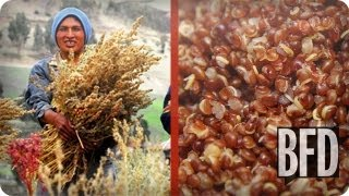 Quinoa: Bad for the Planet? | Talk Back | BFD | TakePart TV