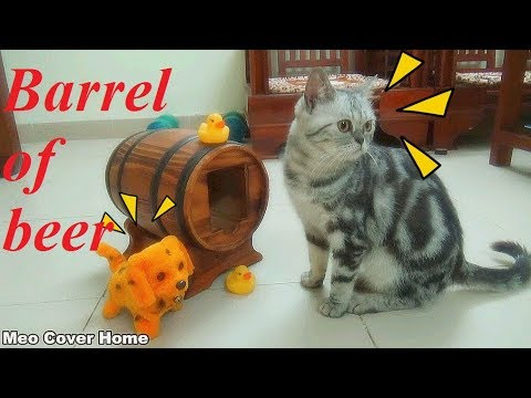 Cat Play With Barrel So Funny | Funny Cat Compilation 2017 | Meo Cover Home