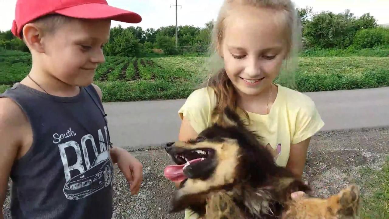 Игры для собак и щенков! - YouTube