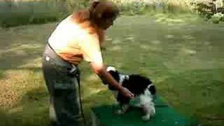 Dog Training, Target Training Cocker Spaniel