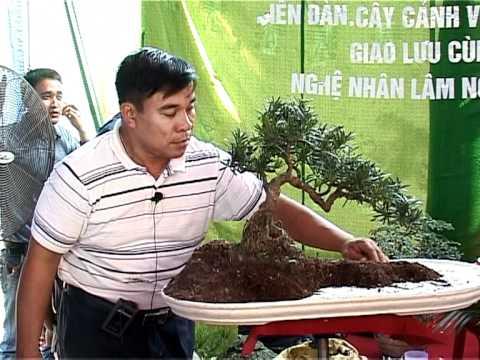Video nghệ nhân Lâm Ngọc Vinh trình bày kỹ thuât tạo hình Tiểu Cảnh  phần 11