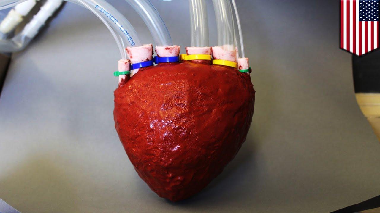 Universidad Cornell Crean Un Nuevo Corazón Artificial A Base De Espuma Youtube