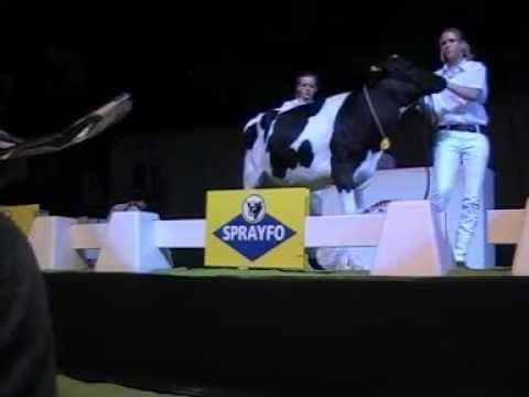 Holstein Master Sale Nr. 19