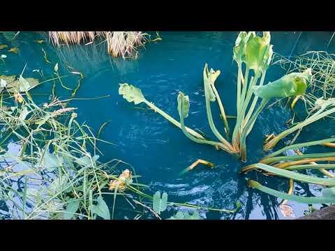 สูตรเด็ด วิธีปรับสภาพน้ำให้ดีขึ้น สีฟ้าสวยสดใส ปลาสดชื่น ปลากินอาหารดีโตเร็ว