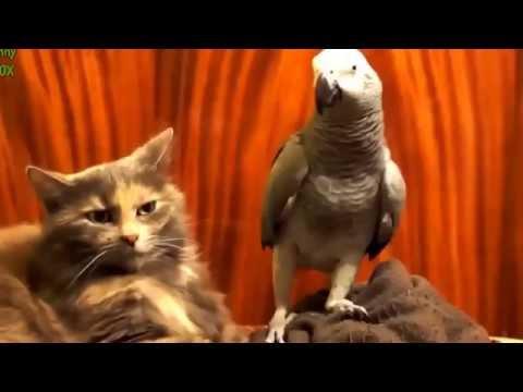 Подборка Приколов С Попугаями (часть 1) - 2 Марта 2013