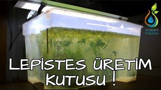 Lepistes Üretim Kutusu (Mini Havuz) Kurulumu + Su Altı Çekimi / Guppy Breeding Box Setup