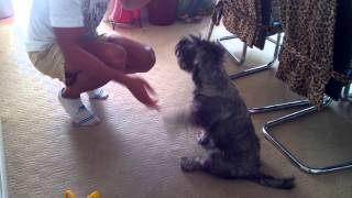 Best EJ  The well trained  Puppy performs clever  tricks Top