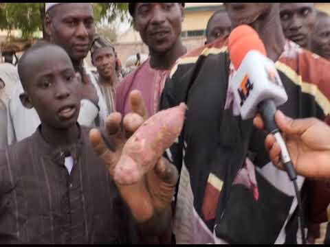 Download Gwarzo Local Government Sweet Potatoes Market