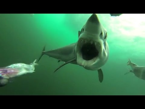 Best underwater scenery ever caught on video - Awe - YouTube