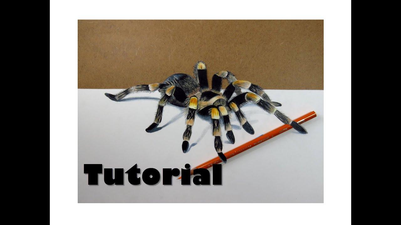 Cómo dibujar una tarántula 3D | How to draw a 3D Spider - YouTube
