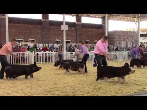 World Pork Expo Grand Champion Berkshire Barrow Drive