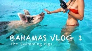 Ausflug zu den echten Bahamas Schwimm-Schweinen 🐷| BAHAMAS VLOG #1