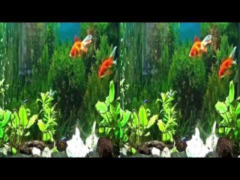 Freshwater Aquarium 3D SBS HD