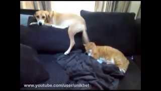 Собака не даёт коту спать!