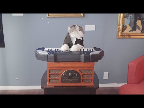 Classical Choir Cats - Aaron's Animals