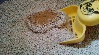 Pasir Kucing Gumpal Wangi Bentonite