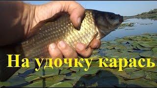 Рыбалка в лилиях на поплавок. Казачьи Лагеря