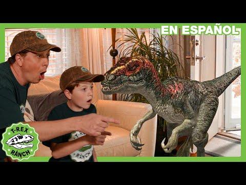 ¡Dinosaurios Y Animales Para Niños! Dinosaurio Gigante Vs Mascota Misteriosa Con Parque Zoológico