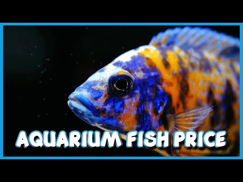 Aquarium Fish Price In India With Their Names 2018 Part 1 Youtube