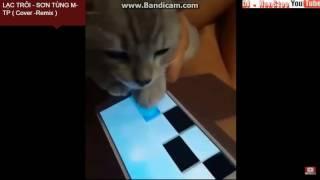 Mèo Chơi Piano Tiles2 ' Lạc Trôi '