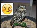 2 Tips to prevent your owl from getting sick