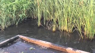カモを追いかけ池にダイブ! そこで待っていたものはヘドロでした(泣)