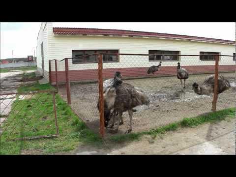 Страусиная ферма «страусиный хутор» организована на базе крестьянского (фермерского) хозяйства в 2009 году. Основным направлением страусиной фермы является выращивание и разведение черного африканского страуса. Среди продуктов, получаемых от страусов, находятся страусиное мясо,