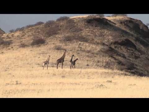 Outdoor Quest TV - Namibia Giraffe