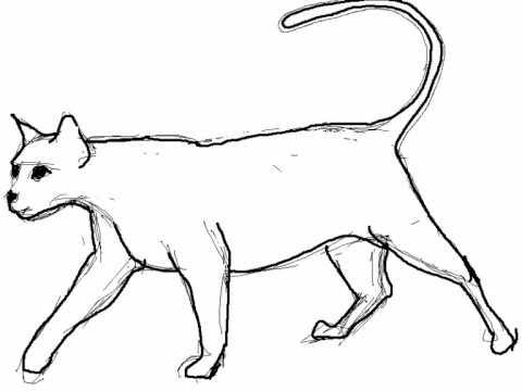 Como dibujar un gato paso a paso , Dibujos de animales