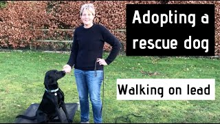Adopting a Rescue Dog - Walking on Lead