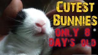 Rabbit give Birth At Home  Funny Baby Bunny Rabbit Videos Compilation-Cute Rabbits