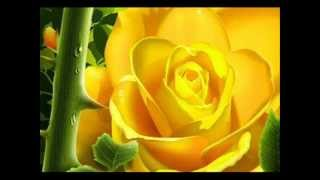4 Qul Beautifull Voice Al Quran Karim .wmv