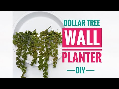 DIY Dollar Tree Wall Planter - Great For Air Plants