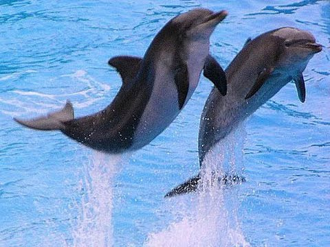 Ocean park Hong Kong Dolphin show 2014