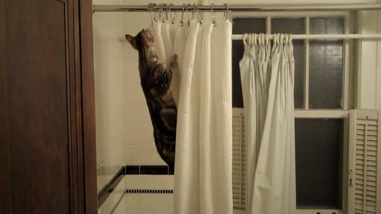 Mallard duck shower curtain - Calvin Destroys The Shower Curtain