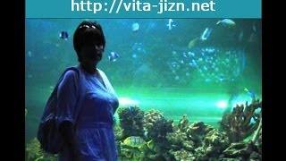 Аквариум в Киеве, морской аквариум, рыбы для аквариума(Аквариум в Киеве открылся не так давно, причем, морской аквариум! Я никак не ожидала, что в довольно незаметн..., 2014-03-11T19:40:04.000Z)