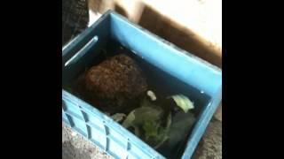 приют для котов и крокодила на рыпке Ростова