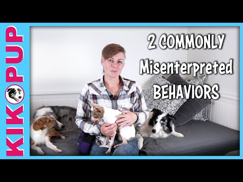 2 Cases DOG BODY LANGUAGE can be MISINTERPRETED - Dog Training