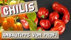Chili anbauen - Anbautipps vom Profi