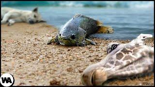 Вот Почему Животные Умирают, Когда эта Рыба Выходит на Сушу
