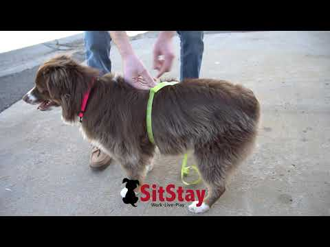How To Measure A Dog For A Vest